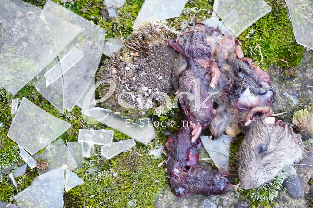 Mrtav pacov