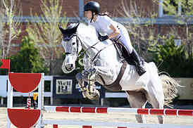 The show jumping
